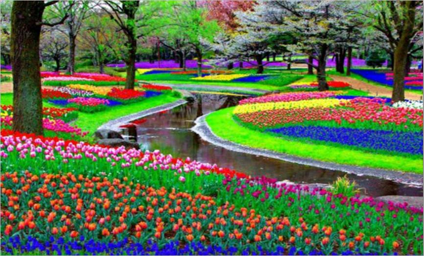 fleur-jardin